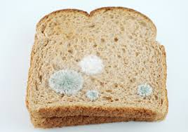 mould bread